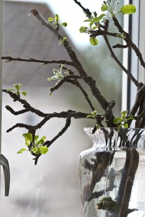Eplegreiner i vase